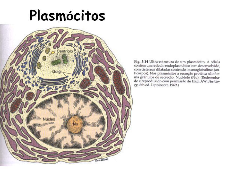 Plasm ó citos