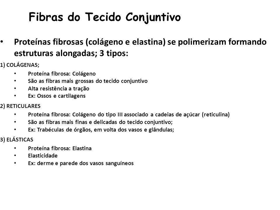 Fibras do Tecido Conjuntivo Proteínas fibrosas (colágeno e elastina) se polimerizam formando estruturas alongadas; 3 tipos: 1) COLÁGENAS; Proteína fibrosa: Colágeno São as fibras mais grossas do tecido conjuntivo Alta resistência a tração Ex: Ossos e cartilagens 2) RETICULARES Proteína fibrosa: Colágeno do tipo III associado a cadeias de açúcar (reticulina) São as fibras mais finas e delicadas do tecido conjuntivo; Ex: Trabéculas de órgãos, em volta dos vasos e glândulas; 3) ELÁSTICAS Proteína fibrosa: Elastina Elasticidade Ex: derme e parede dos vasos sanguíneos