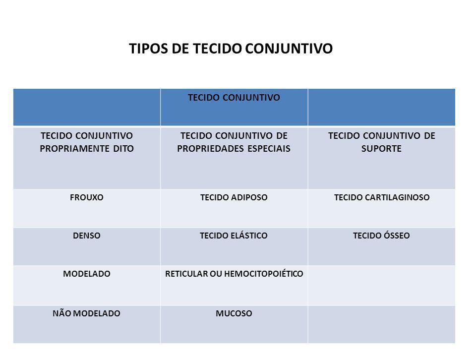 TIPOS DE TECIDO CONJUNTIVO TECIDO CONJUNTIVO TECIDO CONJUNTIVO PROPRIAMENTE DITO TECIDO CONJUNTIVO DE PROPRIEDADES ESPECIAIS TECIDO CONJUNTIVO DE SUPORTE FROUXOTECIDO ADIPOSOTECIDO CARTILAGINOSO DENSOTECIDO ELÁSTICOTECIDO ÓSSEO MODELADORETICULAR OU HEMOCITOPOIÉTICO NÃO MODELADOMUCOSO
