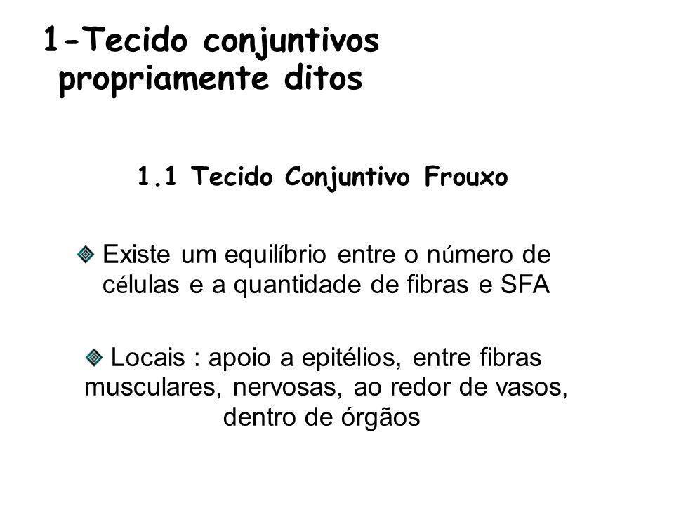 1-Tecido conjuntivos propriamente ditos Existe um equil í brio entre o n ú mero de c é lulas e a quantidade de fibras e SFA Locais : apoio a epitélios