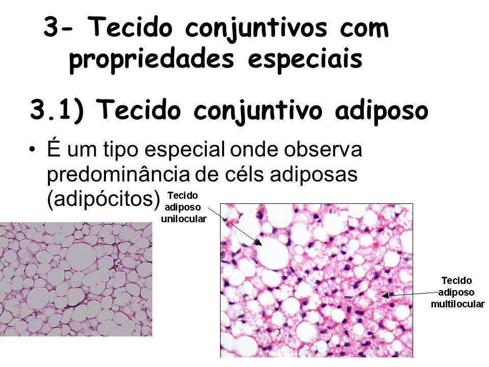 3- Tecido conjuntivos com propriedades especiais É um tipo especial onde observa predominância de céls adiposas (adipócitos) 3.1) Tecido conjuntivo ad