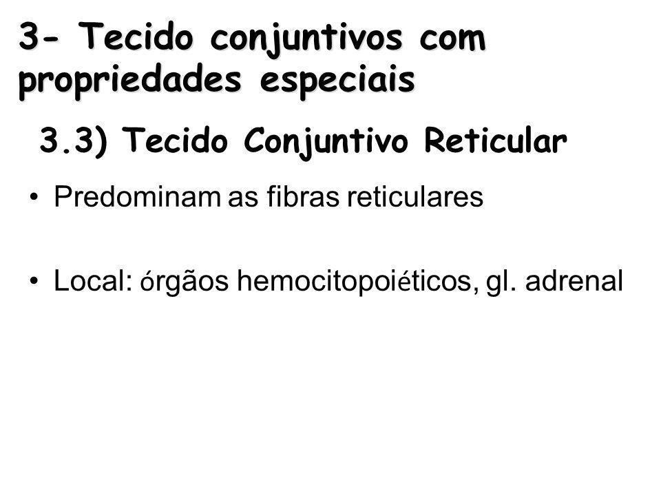 3.3) Tecido Conjuntivo Reticular Predominam as fibras reticulares Local: ó rgãos hemocitopoi é ticos, gl. adrenal 3- Tecido conjuntivos com propriedad