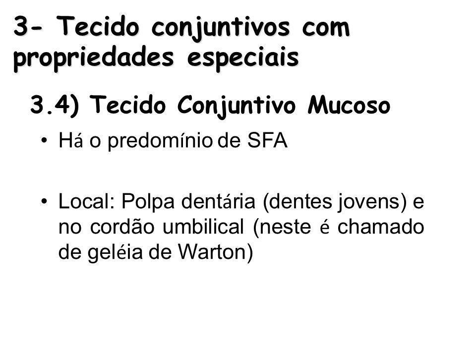 3.4) Tecido Conjuntivo Mucoso H á o predom í nio de SFA Local: Polpa dent á ria (dentes jovens) e no cordão umbilical (neste é chamado de gel é ia de Warton) 3- Tecido conjuntivos com propriedades especiais