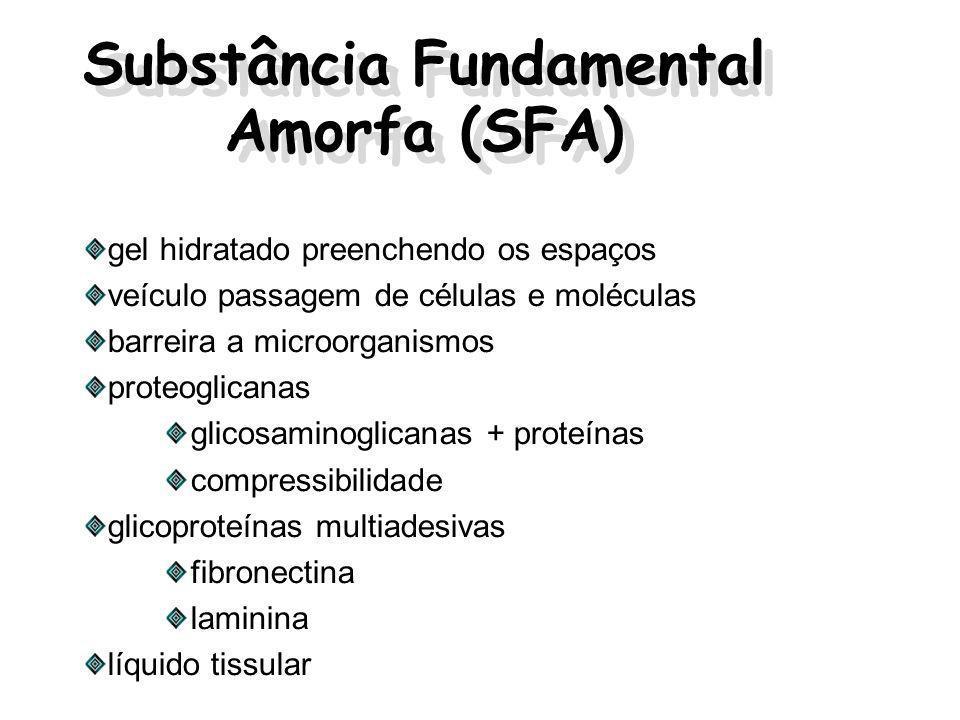 Substância Fundamental Amorfa (SFA) gel hidratado preenchendo os espaços veículo passagem de células e moléculas barreira a microorganismos proteoglicanas glicosaminoglicanas + proteínas compressibilidade glicoproteínas multiadesivas fibronectina laminina líquido tissular