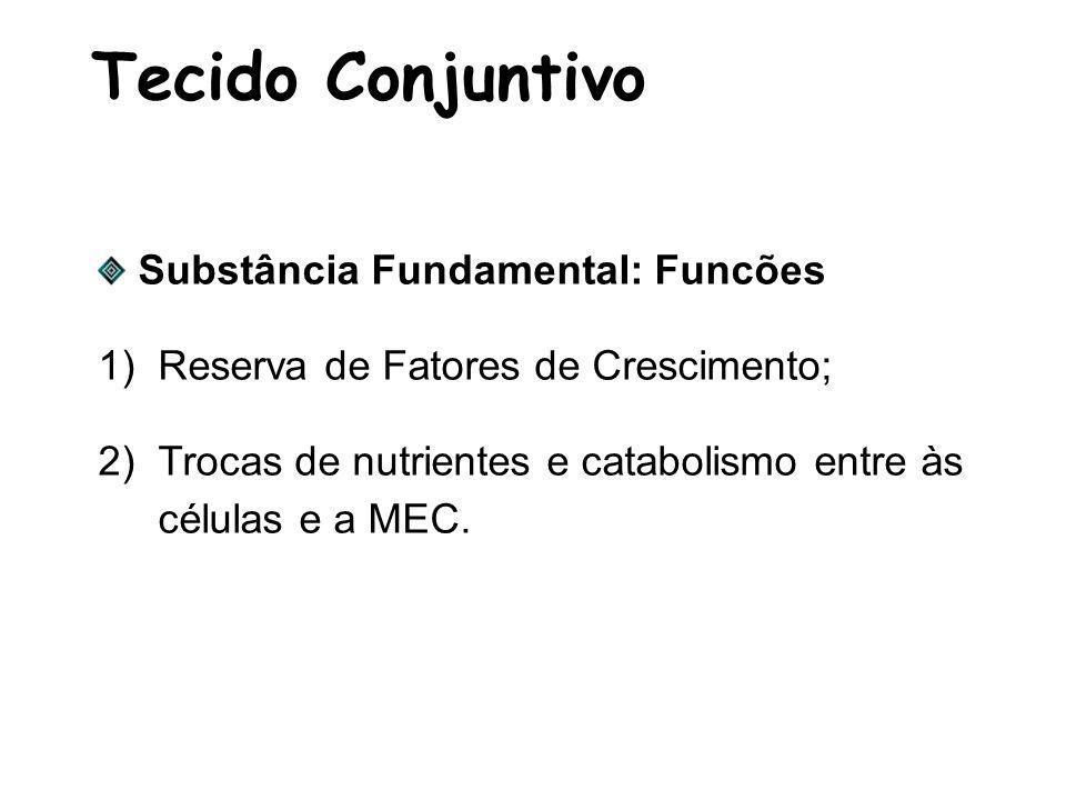 Tecido Conjuntivo Substância Fundamental: Funcões 1)Reserva de Fatores de Crescimento; 2)Trocas de nutrientes e catabolismo entre às células e a MEC.
