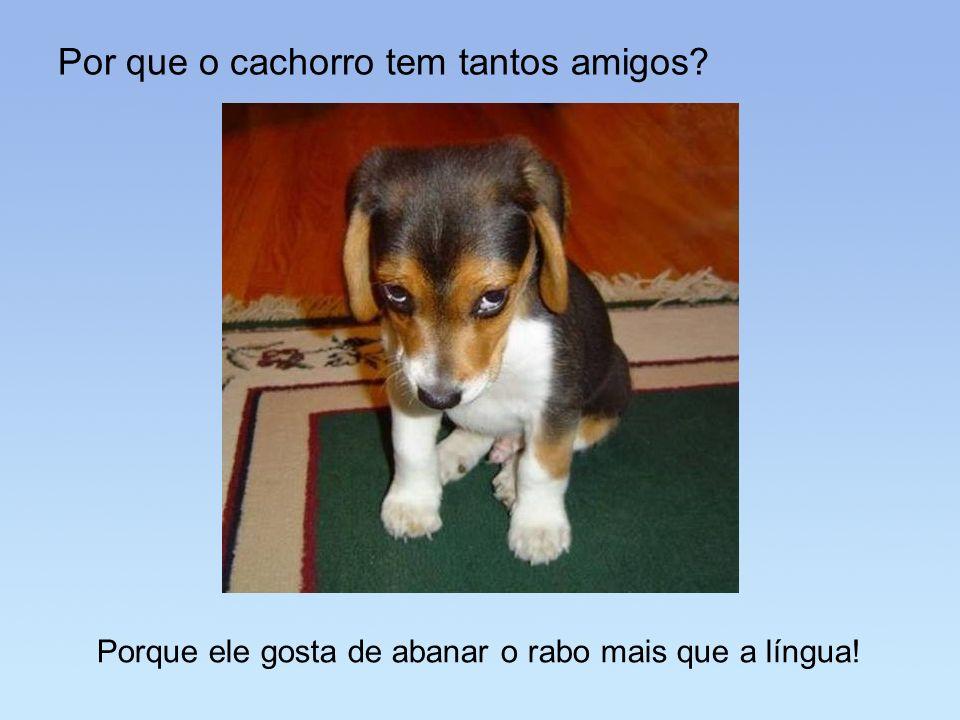 Por que o cachorro tem tantos amigos? Porque ele gosta de abanar o rabo mais que a língua!