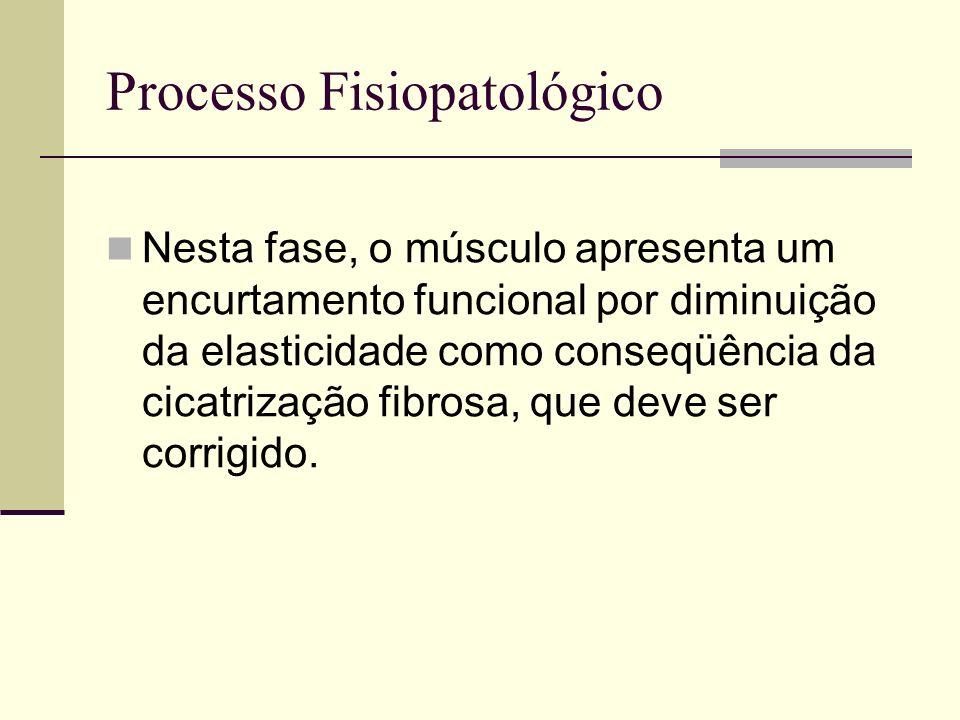 Processo Fisiopatológico Nesta fase, o músculo apresenta um encurtamento funcional por diminuição da elasticidade como conseqüência da cicatrização fi