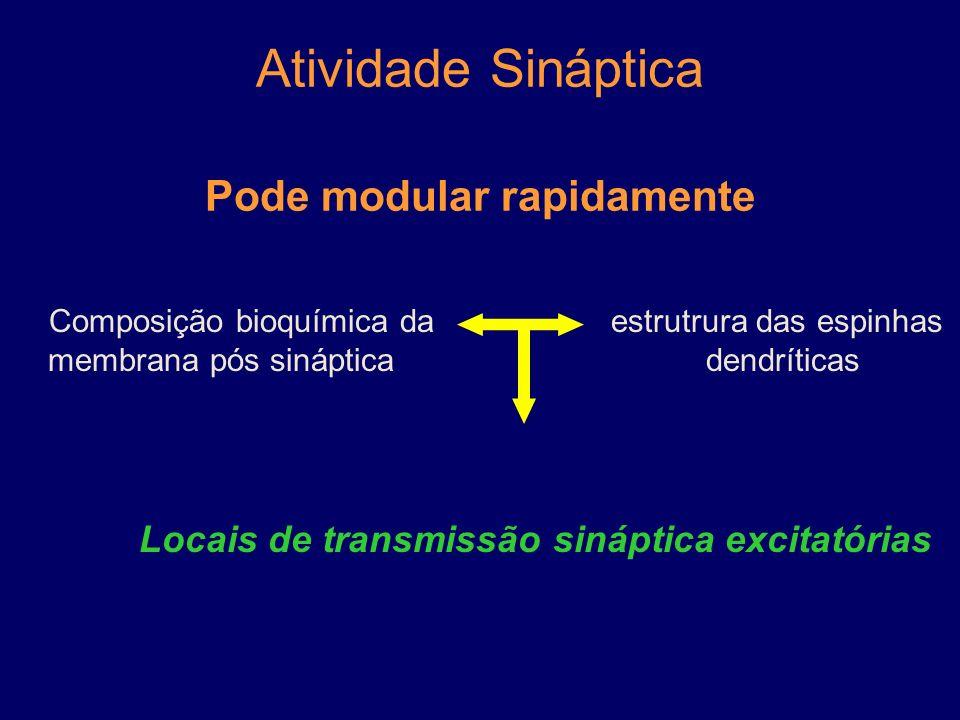 Plasticidade Sináptica Capacidade de modificação das sinapses químicas, por períodos curtos ou longos. dentro do neurônio processos extrínsecos Import