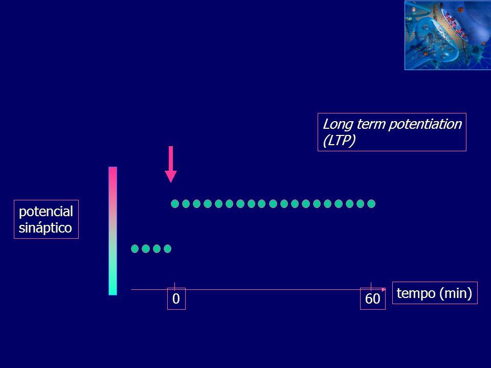Espinhas sofrem rápidas mudanças de forma Experimentos com espinhas dendríticas de neurônios hipocampais dissociados (vídeo microscopia de fluorescênc