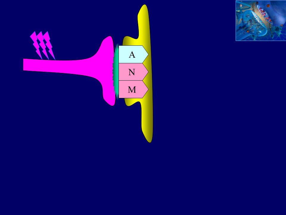 A N M A time (min) 060 Potencial sináptico