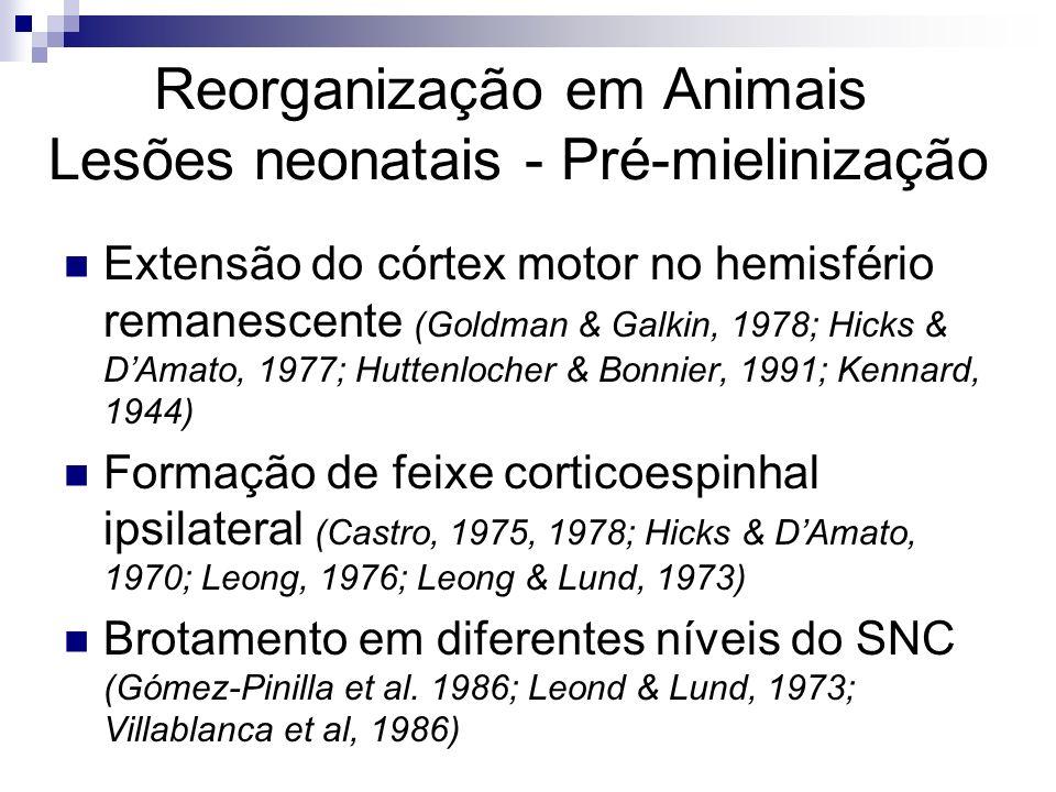 Plasticidade do Sistema nervoso Reparação Reorganização Sinaptogênese reativa; Brotamento Neurogênese