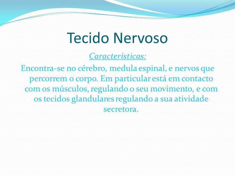 Composição: O tecido nervoso é formado por células excitáveis especializadas em transmitir estímulos ou impulsos nervosos graças a uma série muito complexa de atividades físico-químicas da sua membrana.