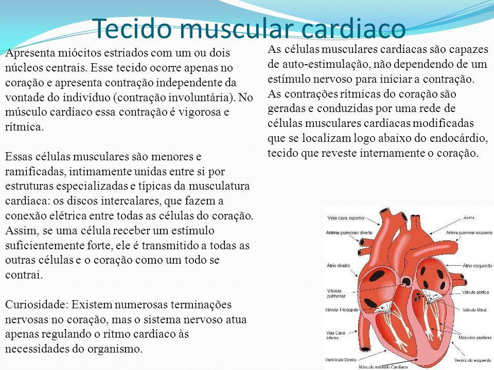 Tecido muscular liso As células musculares lisas não apresentam estriação transversal, característica das células musculares esqueléticas e cardíacas.