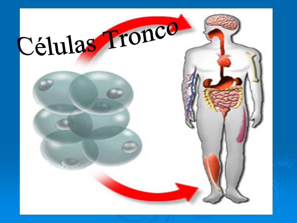 Introdução Nos últimos anos o assunto células-tronco tem sido muito debatido, e é objeto freqüentemente exposto na mídia.