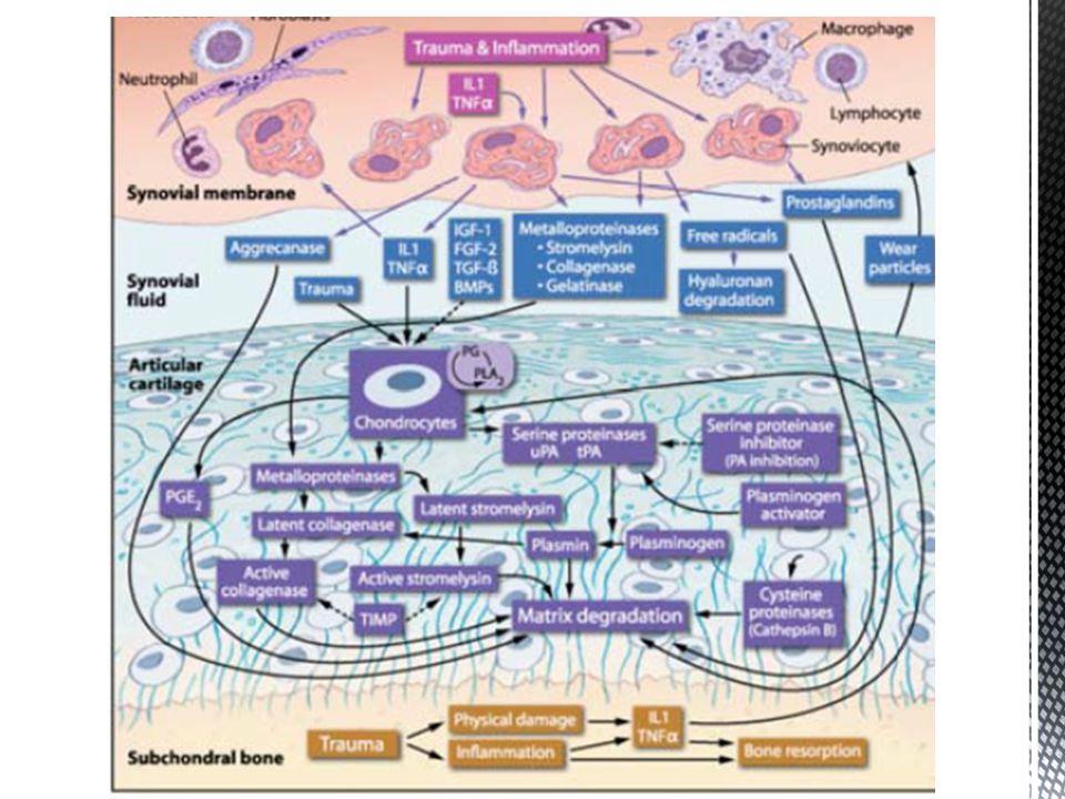 Inibição da interação antígeno-anticorpo Inibição da síntese de interleucina-1 (IL-1) e da degradação da cartilagem induzida por esta citocina (supressão da produção de NO induzida por IL-1).