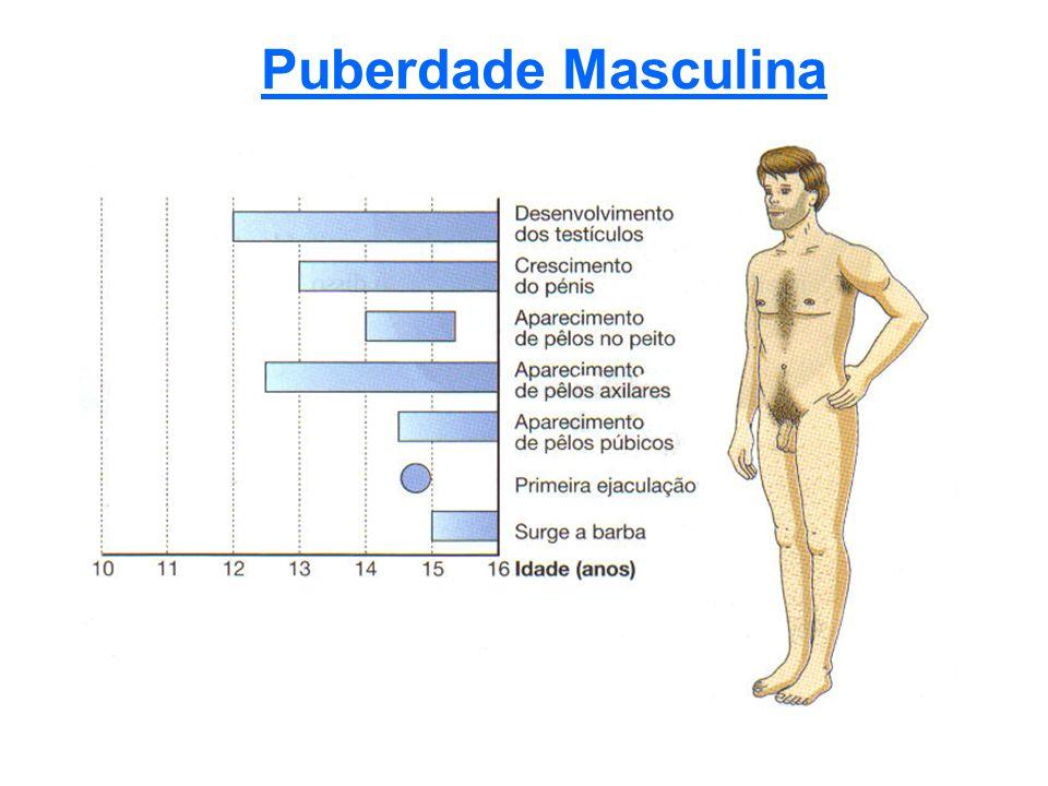 Puberdade Masculina