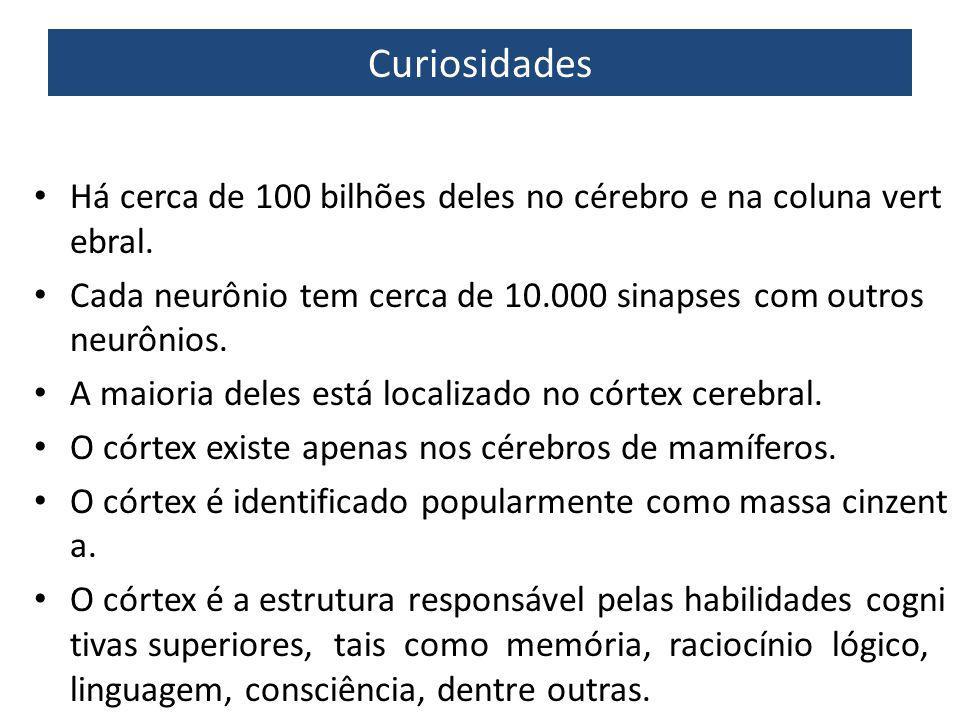 Mais curiosidades O cérebro produz sim novos neurônios (e.g.