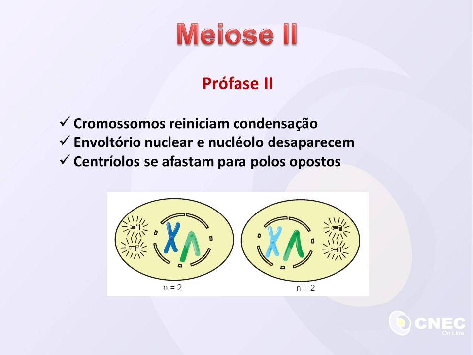 Prófase II Cromossomos reiniciam condensação Envoltório nuclear e nucléolo desaparecem Centríolos se afastam para polos opostos
