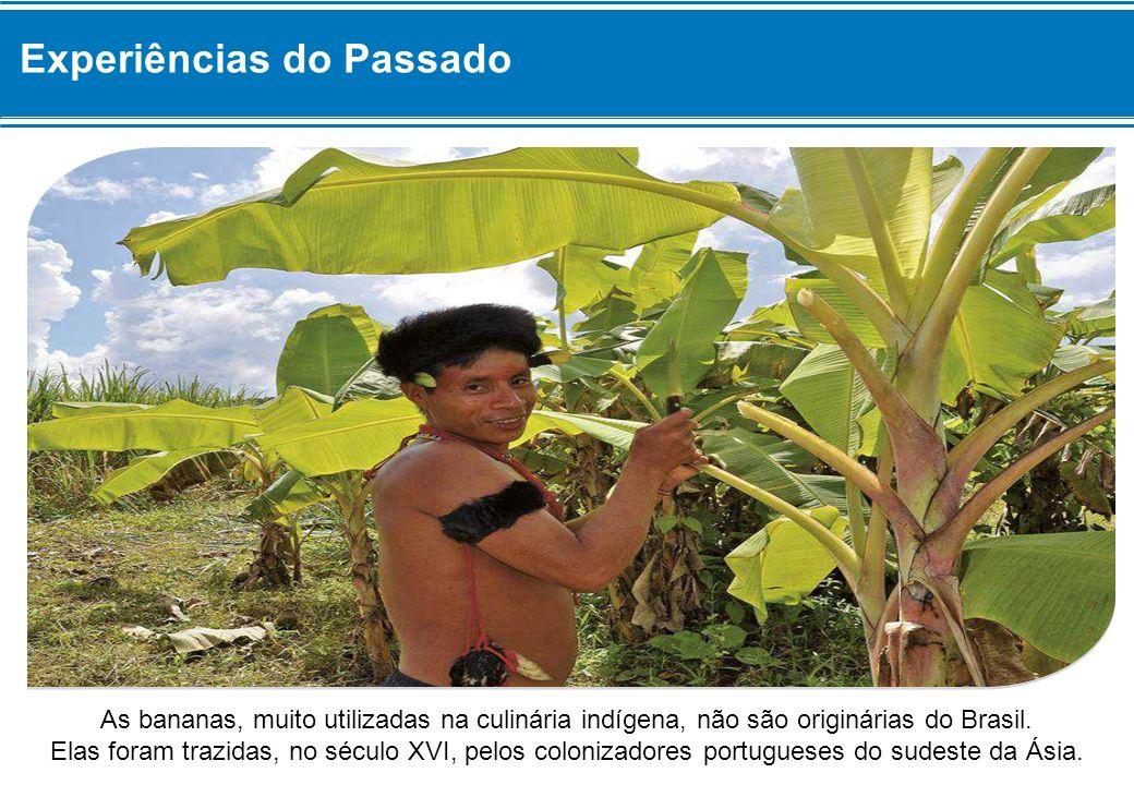As bananas, muito utilizadas na culinária indígena, não são originárias do Brasil. Elas foram trazidas, no século XVI, pelos colonizadores portugueses