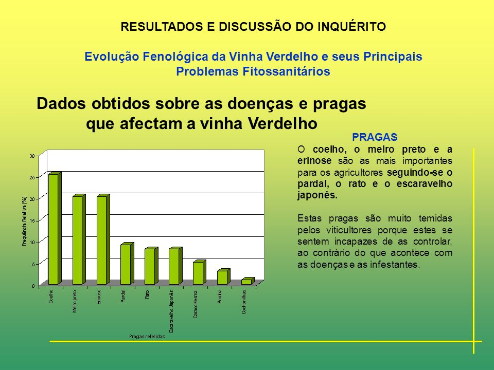 Dados obtidos sobre as doenças e pragas que afectam a vinha Verdelho DOENÇAS Foi baixa a diversidade de respostas obtidas relativamente às diferentes