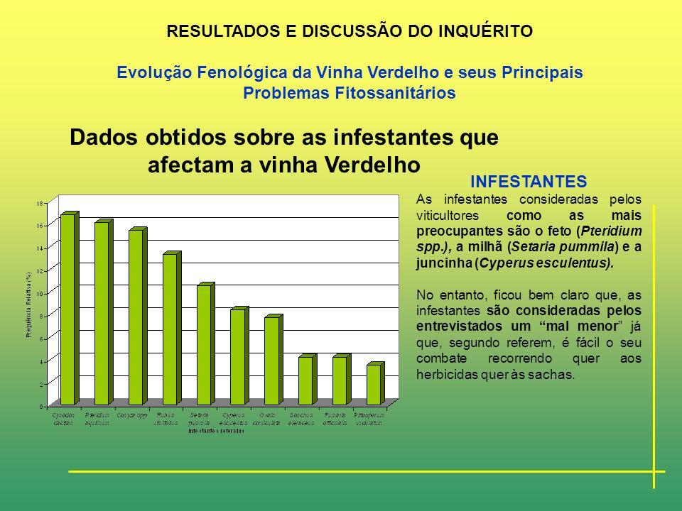 Dados obtidos sobre as doenças e pragas que afectam a vinha Verdelho PRAGAS O coelho, o melro preto e a erinose são as mais importantes para os agricu