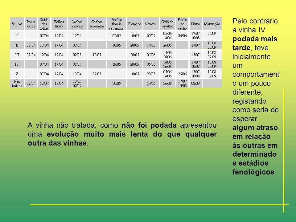 RESULTADOS E DISCUSSÃO- Dados obtidos sobre a evolução fenológica da vinha Verdelho no ano de 1997 Para cada dia de amostragem foi definido qual o est