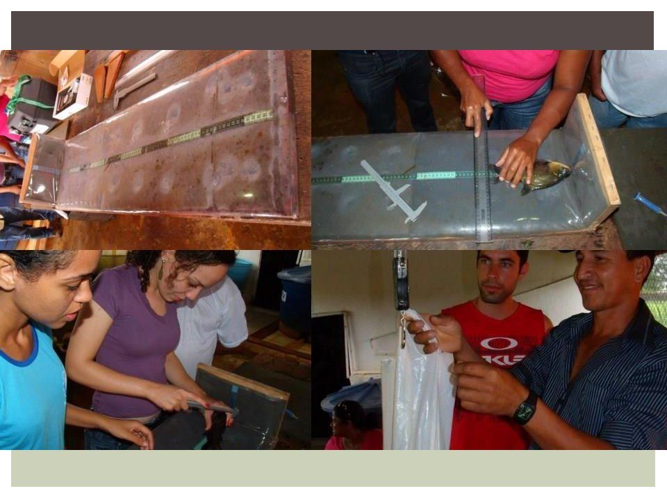 A biometria consiste na pesagem e medidas de amostras de peixes ou alevinos, que estão sendo criados, de forma a calcular a biomassa total. A partir d