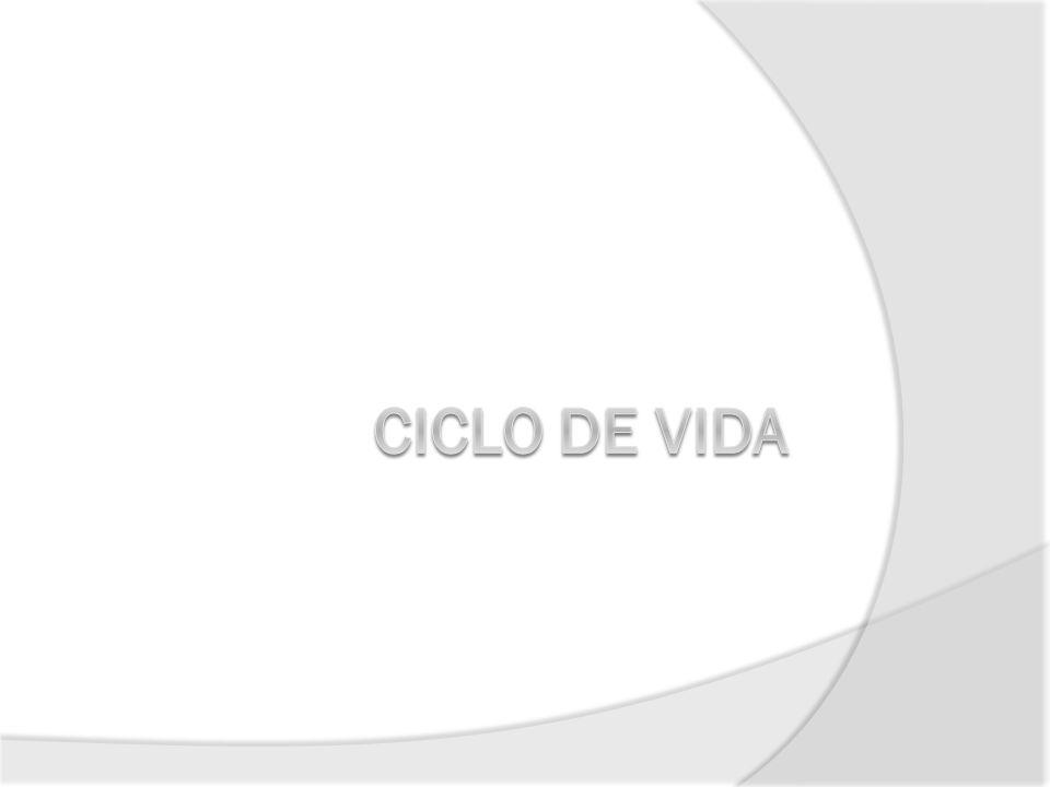 Ciclo de Vida do Projeto Para que se tenha um melhor controle do projeto e se crie interdependência entre as atividades, dividem-se os projetos em algumas fases, constituindo o chamado CICLO DE VIDA DO PROJETO 43