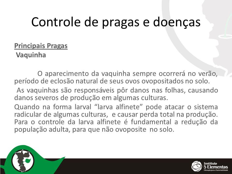 Controle de pragas e doenças Principais Pragas Vaquinha O aparecimento da vaquinha sempre ocorrerá no verão, período de eclosão natural de seus ovos o