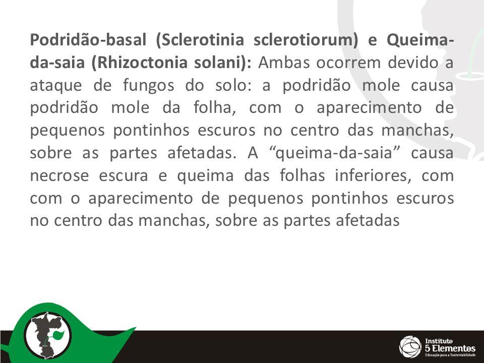 Podridão-basal (Sclerotinia sclerotiorum) e Queima- da-saia (Rhizoctonia solani): Ambas ocorrem devido a ataque de fungos do solo: a podridão mole cau