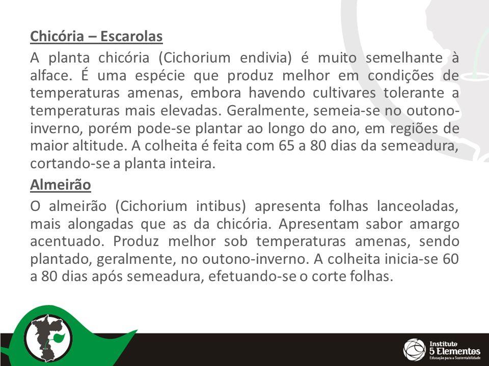 Chicória – Escarolas A planta chicória (Cichorium endivia) é muito semelhante à alface. É uma espécie que produz melhor em condições de temperaturas a