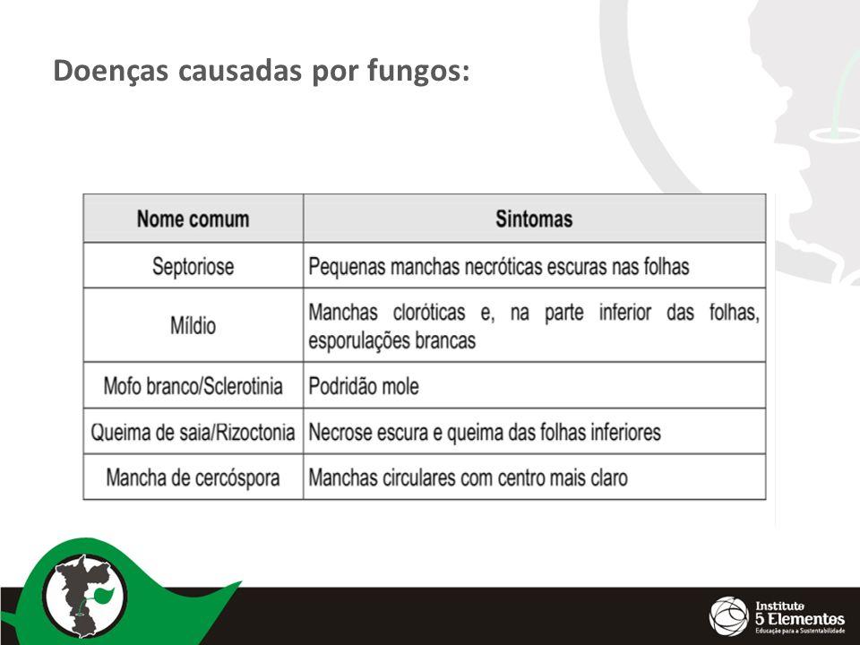 Doenças causadas por fungos: