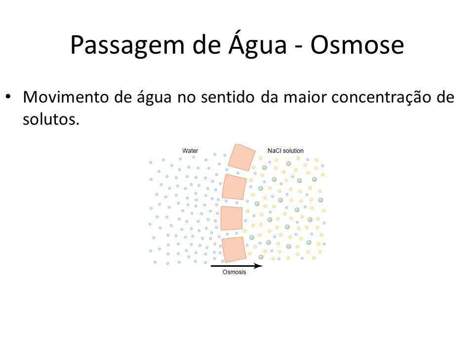 Passagem de Água - Osmose Movimento de água no sentido da maior concentração de solutos.
