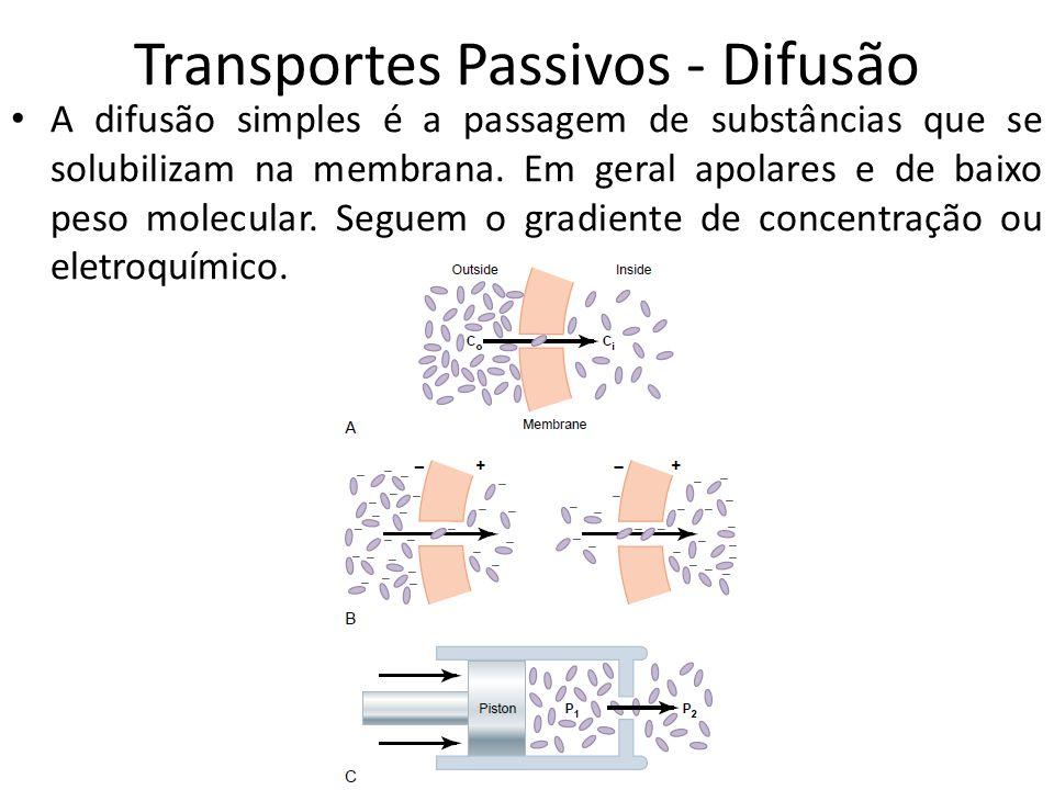 Transportes Passivos - Difusão A difusão simples é a passagem de substâncias que se solubilizam na membrana. Em geral apolares e de baixo peso molecul