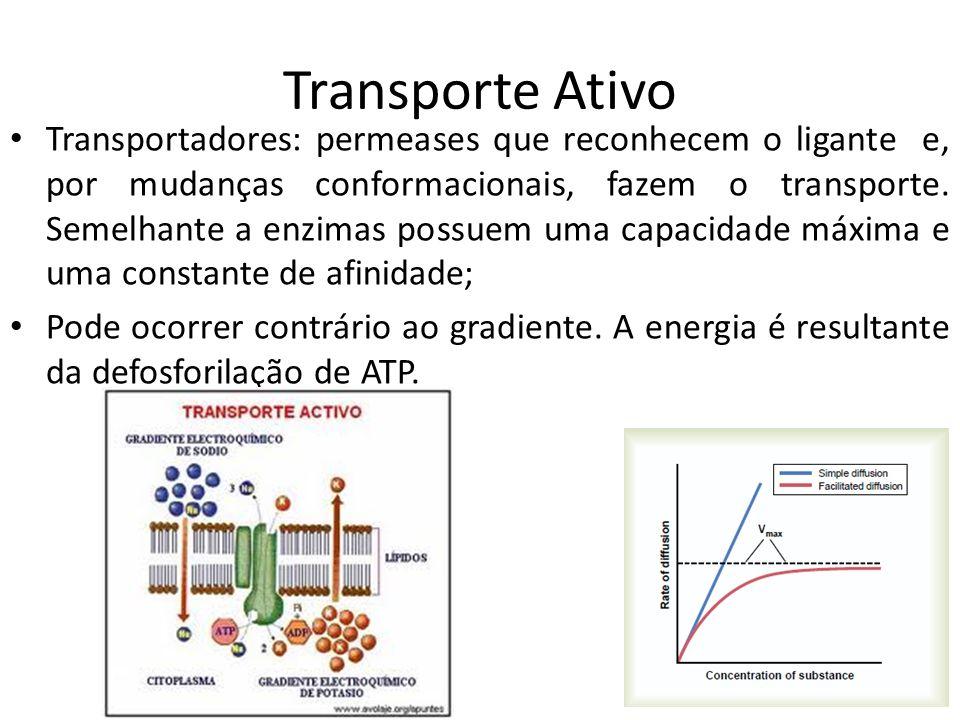 Transporte Ativo Transportadores: permeases que reconhecem o ligante e, por mudanças conformacionais, fazem o transporte. Semelhante a enzimas possuem