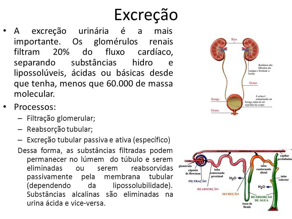 Excreção A excreção urinária é a mais importante. Os glomérulos renais filtram 20% do fluxo cardíaco, separando substâncias hidro e lipossolúveis, áci