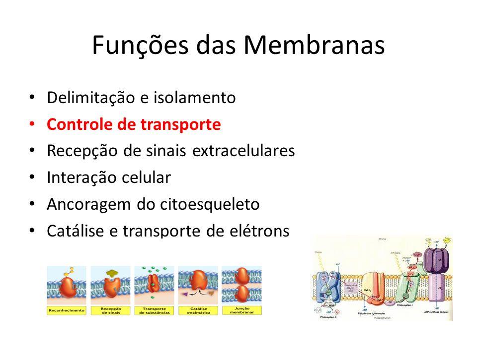 Funções das Membranas Delimitação e isolamento Controle de transporte Recepção de sinais extracelulares Interação celular Ancoragem do citoesqueleto C
