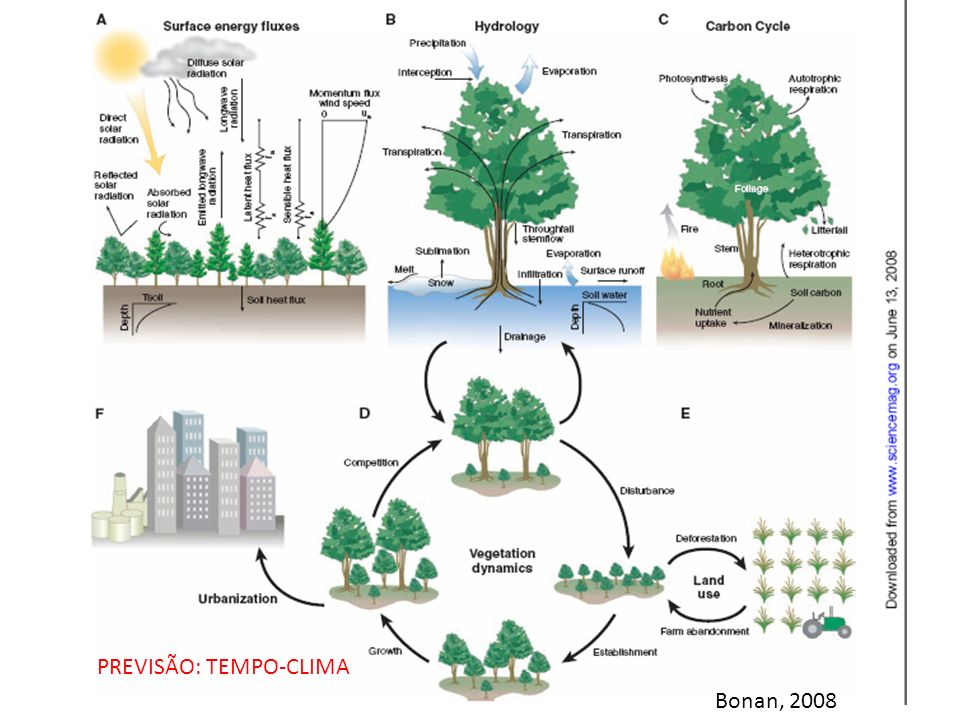 Bonan, 2008 PREVISÃO: TEMPO-CLIMA