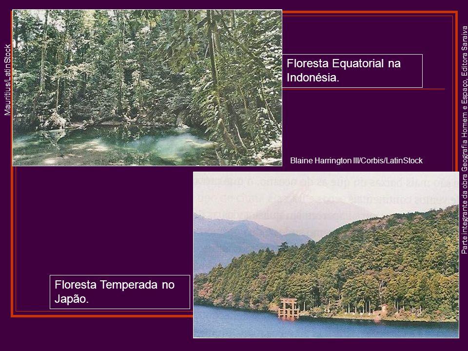 Parte integrante da obra Geografia Homem e Espaço, Editora Saraiva Floresta Equatorial na Indonésia.