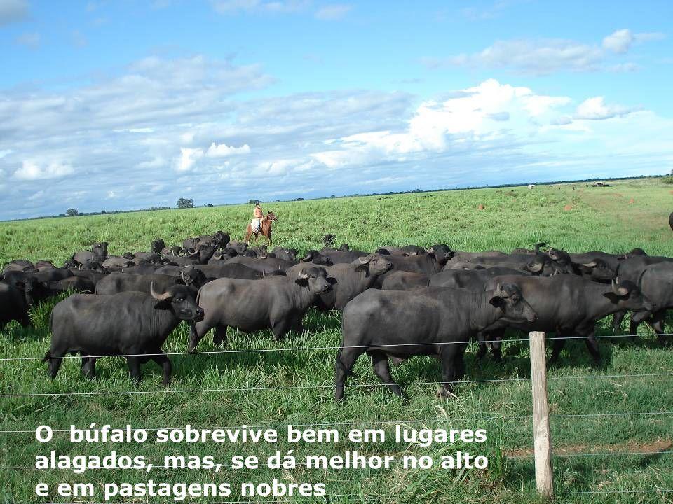 QUEIMADAS – O Inimigo nº 01 do meio ambiente nos cerrados e varjões.