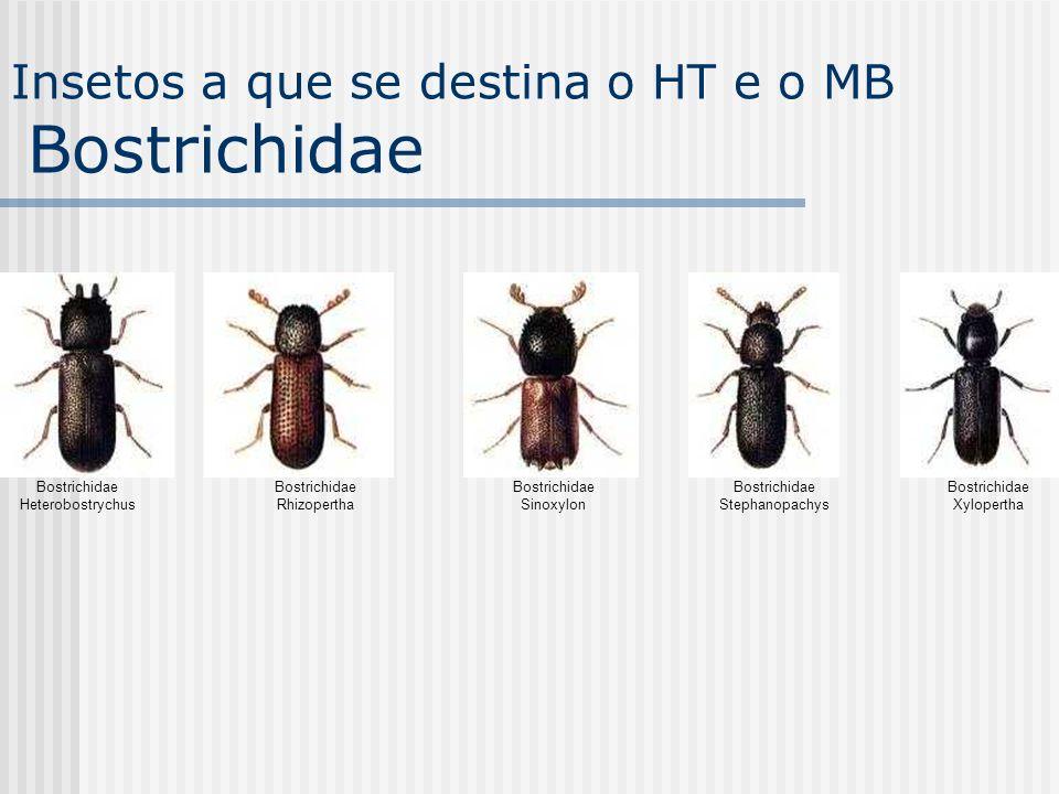 Bostrichidae Heterobostrychus Bostrichidae Rhizopertha Bostrichidae Sinoxylon Bostrichidae Stephanopachys Bostrichidae Xylopertha Insetos a que se des