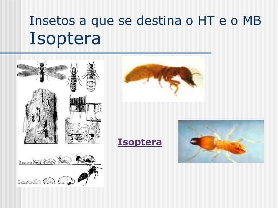 Insetos a que se destina o HT e o MB Isoptera Isoptera
