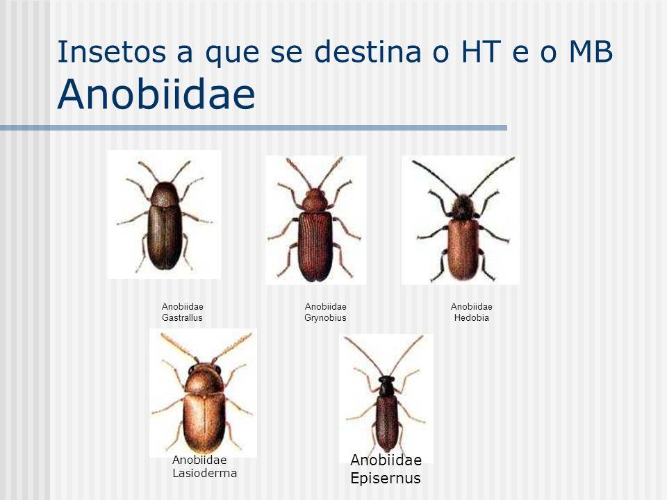 Anobiidae Gastrallus Anobiidae Grynobius Anobiidae Hedobia Anobiidae Lasioderma Anobiidae Episernus Insetos a que se destina o HT e o MB Anobiidae
