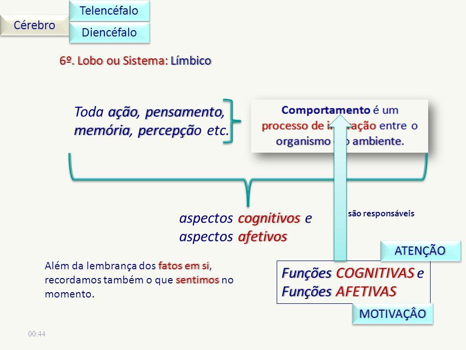 00:44 Cérebro Telencéfalo 6º.Lobo ou Sistema: Límbico6º.