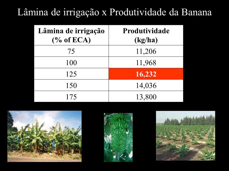 Lâmina de irrigação (% of ECA) Produtividade (kg/ha) 7511,206 10011,968 12516,232 15014,036 17513,800 Lâmina de irrigação x Produtividade da Banana