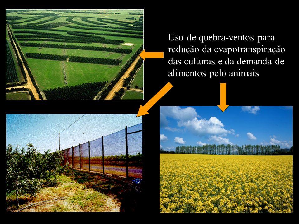 Uso de quebra-ventos para redução da evapotranspiração das culturas e da demanda de alimentos pelo animais