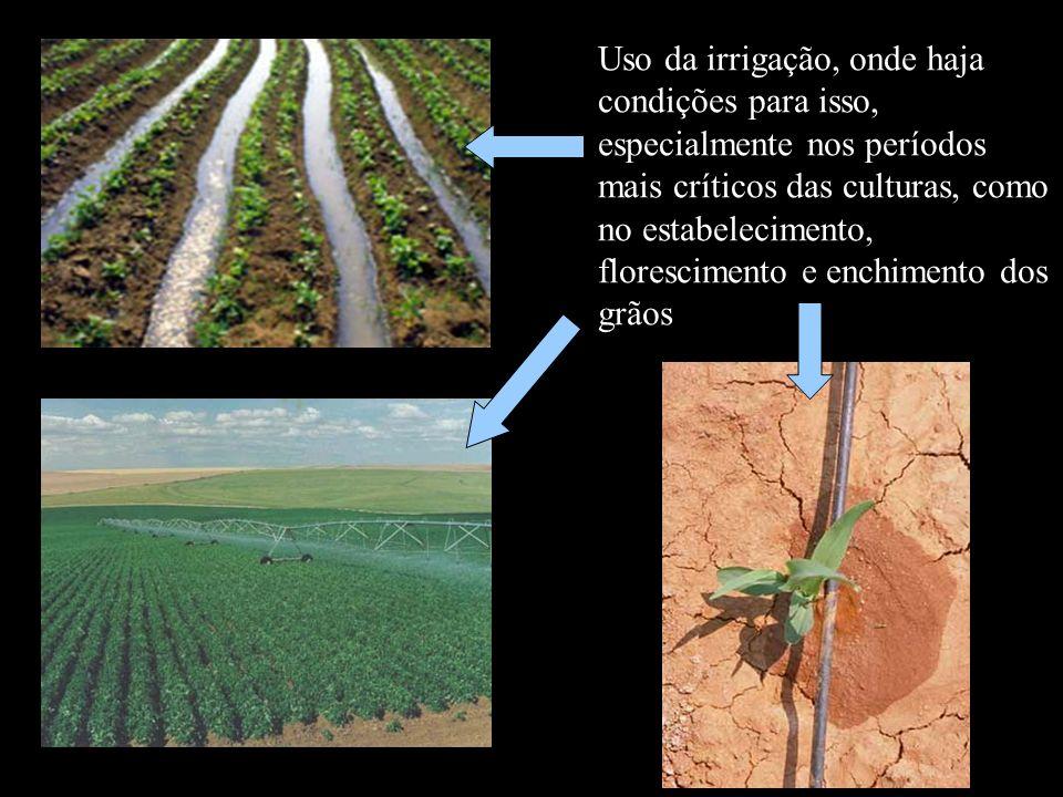 Uso da irrigação, onde haja condições para isso, especialmente nos períodos mais críticos das culturas, como no estabelecimento, florescimento e enchi