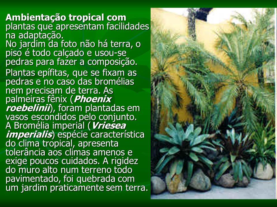 Ambientação tropical com plantas que apresentam facilidades na adaptação.
