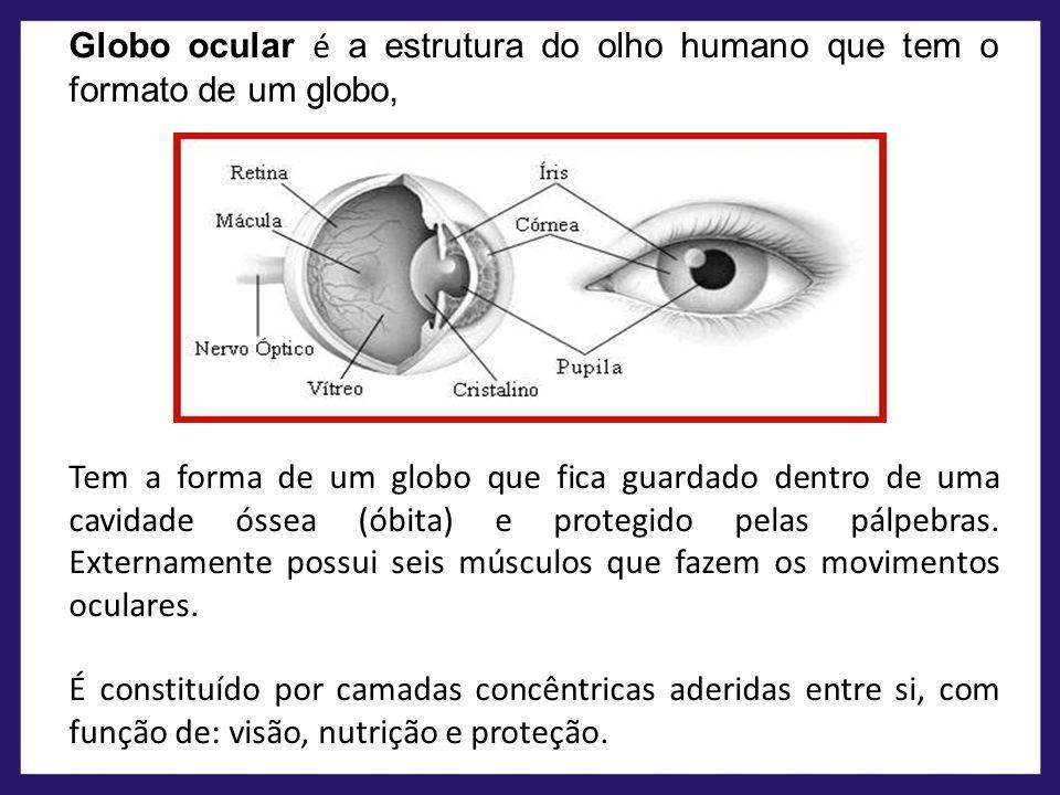 Globo ocular é a estrutura do olho humano que tem o formato de um globo, Tem a forma de um globo que fica guardado dentro de uma cavidade óssea (óbita