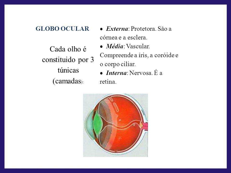 GLOBO OCULAR Cada olho é constituido por 3 túnicas (camadas ): Externa: Protetora. São a córnea e a esclera. Média: Vascular. Compreende a íris, a cor